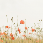 Sea of Poppies: A follow up before River of Smoke